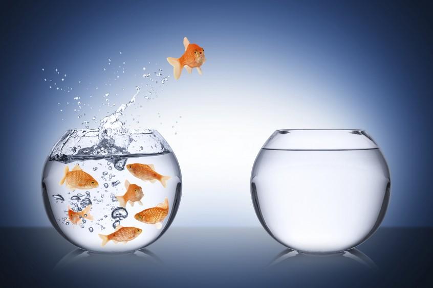 fish escape cocept